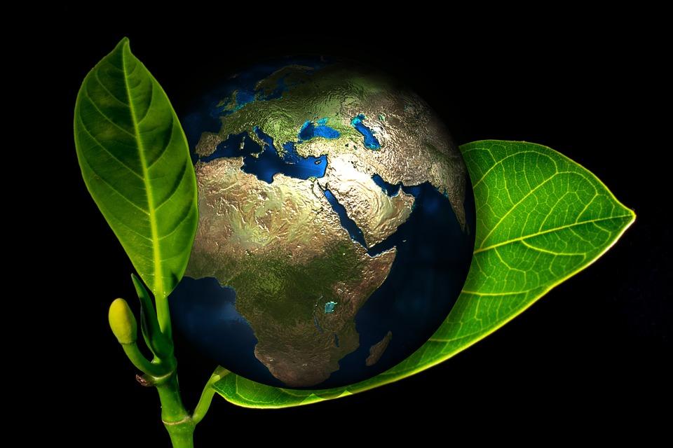 Cuidar el medio ambiente: las empresas también deben ayudar