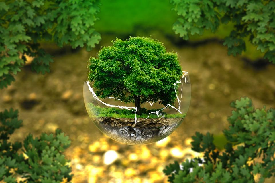 6 maneras de cuidar el medio ambiente en tu empresa